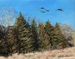 Geese over Cedars by Ben Palmer