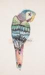 Zentangle Parrot by Kelly-Marie M. Christensen